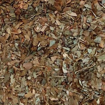 Miłorząb japoński ginko biloba - zioła na wagę